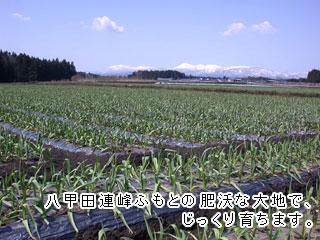 八甲田連峰ふもとの肥沃な大地でじっくり育ちます